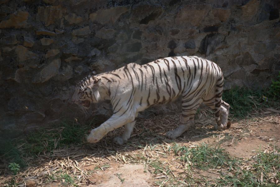 Arignar Anna Zoological Park, Chennai