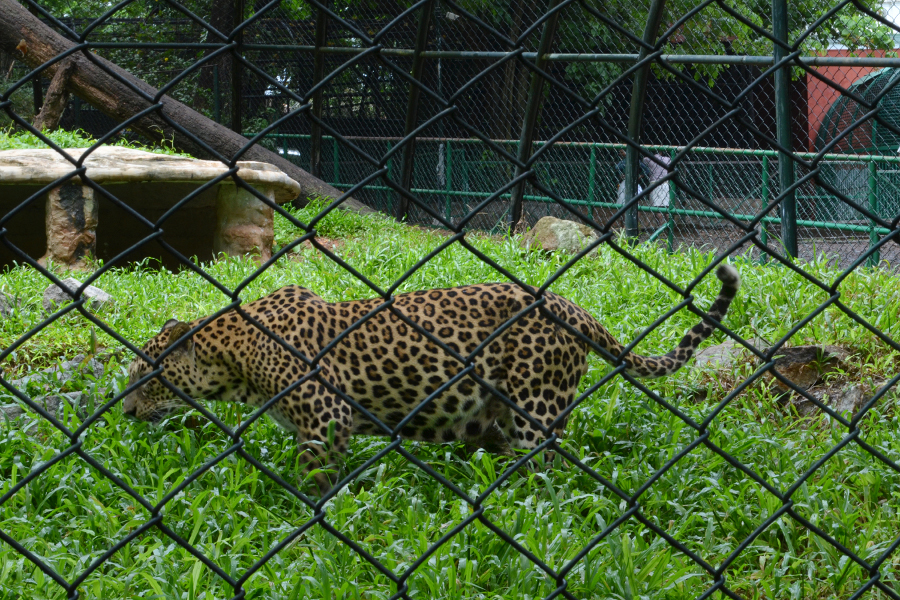 Trivandrum Zoo, Thiruvananthapuram
