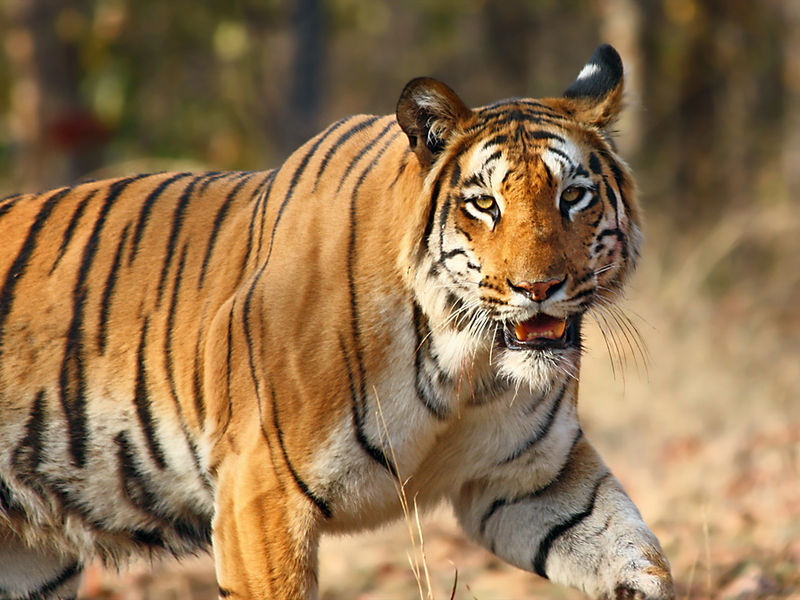 Famous national parks in India